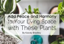 Add Peace and Harmony to Your Living Space with These Plants