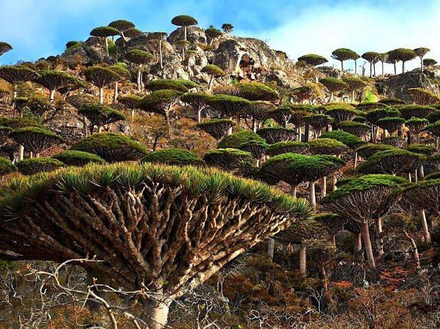 Socotra Arabian Sea