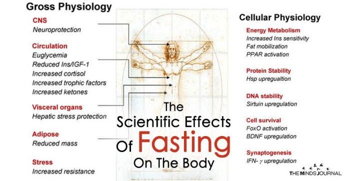 The Scientific Effects Of Fasting On The Body