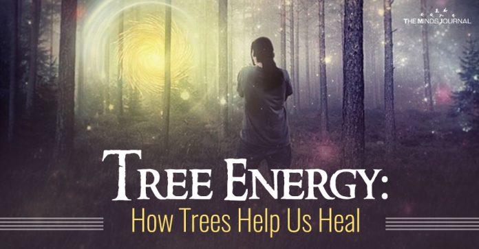 Tree Energy: How Trees Help Us Heal