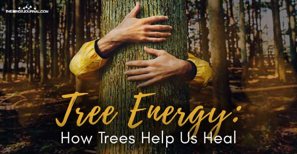 Tree Energy How Trees Help Us Heal