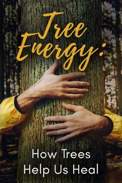 Tree Energy How Trees Help Us Heal Pin