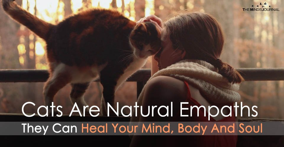 Cats Are Natural Empaths Who Can Heal Your Mind, Body and Soul