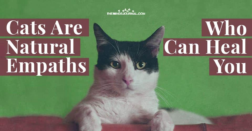 Cats Natural Empaths Heal Your Mind Body Soul