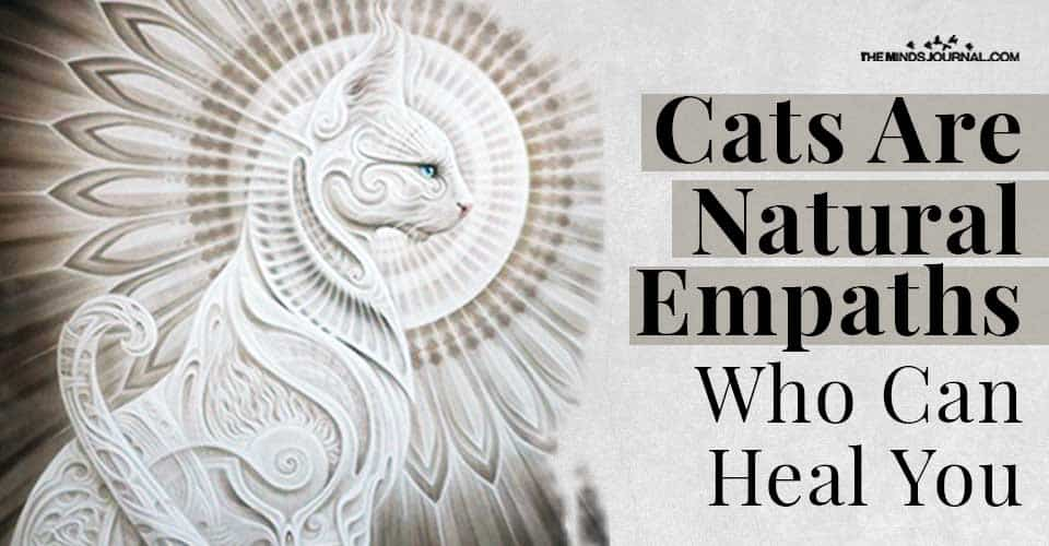 Cats Natural Empaths Who Heal Your Mind