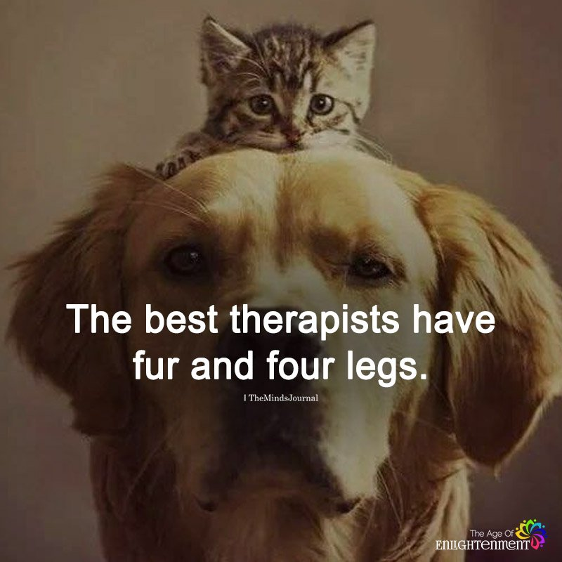 The Best Therapists Have Fur And Four Legs
