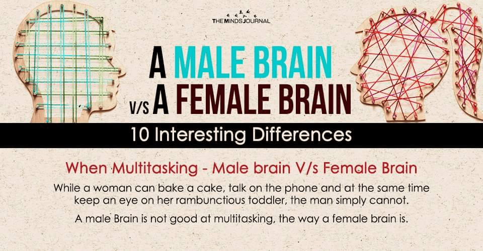 A Male Brain Vs A Female Brain - 10 Interesting Differences