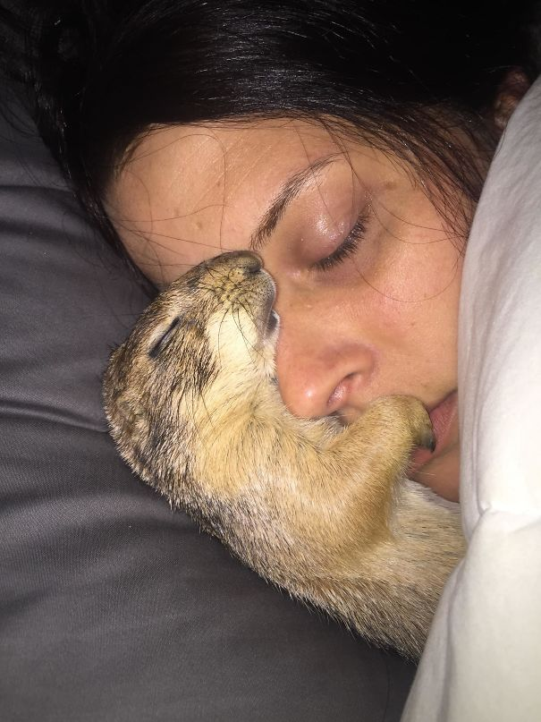 Prairie dog and the owner's gf asleep