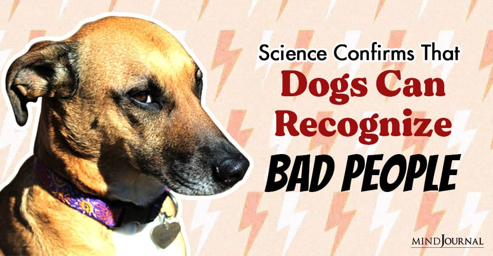 Science Confirms That Dogs Can Recognize Bad People