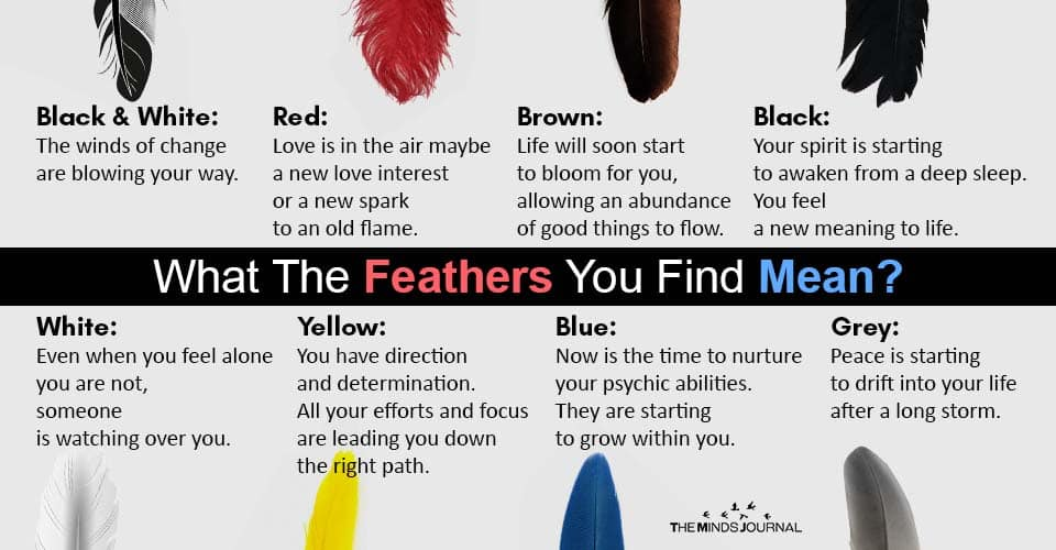 Spirit Messages Feathers You Find Mean