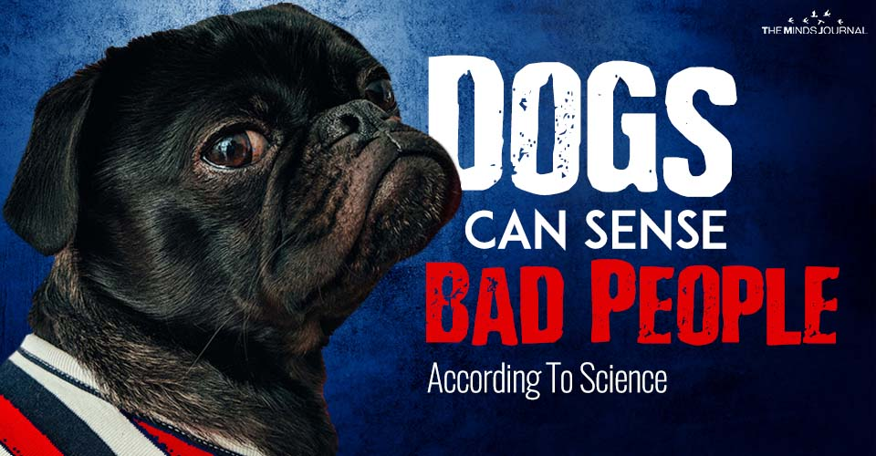 Dogs Can Sense Bad People according to science