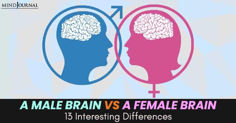 male brain vs female brain 1