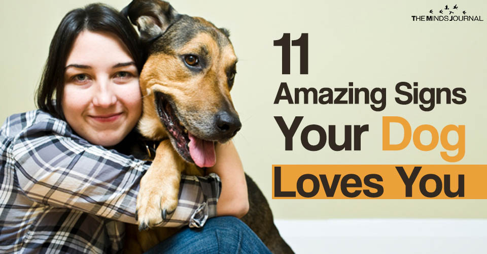 11 Amazing Signs Your Dog Loves You
