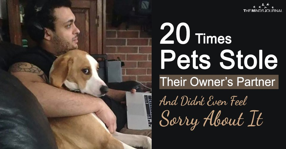 20 Times Pets Stole Their Owner's Partner And Didn't Even Feel Sorry About It