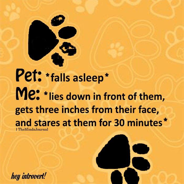 Pet: *falls asleep*