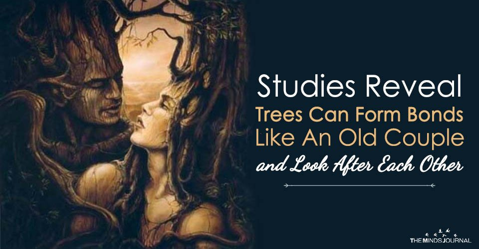 Studies Reveal Trees Can Form Bonds Like An Old Couple and Look After Each Other