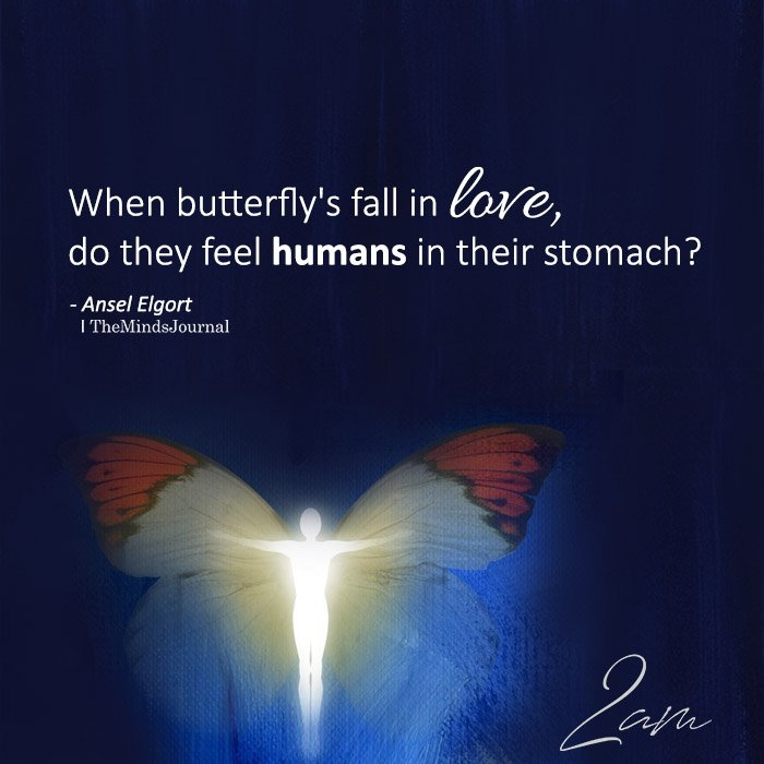 When butterfly's fall in love