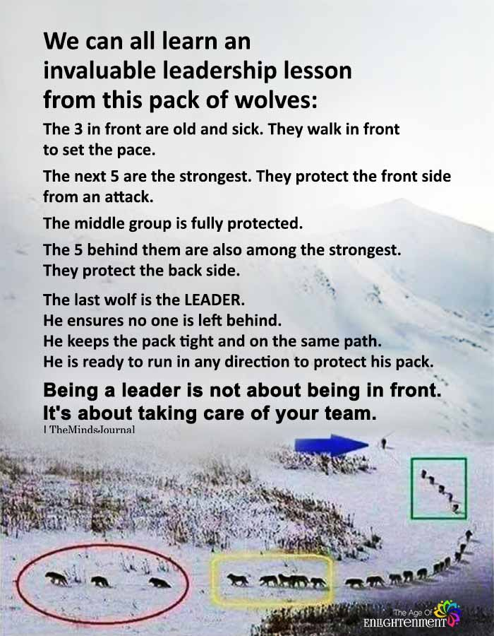 We can all learn an invaluable leadership lesson from this pack of wolves