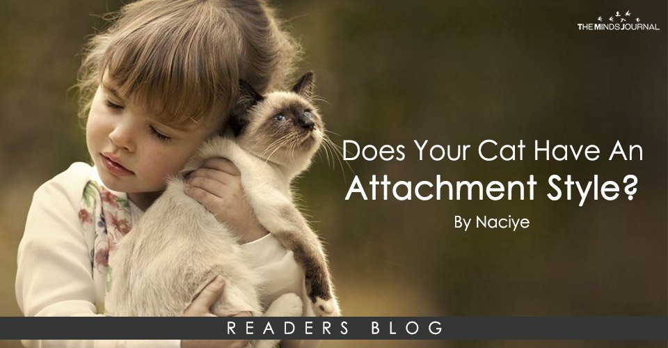 Does Your Cat Have An Attachment Style