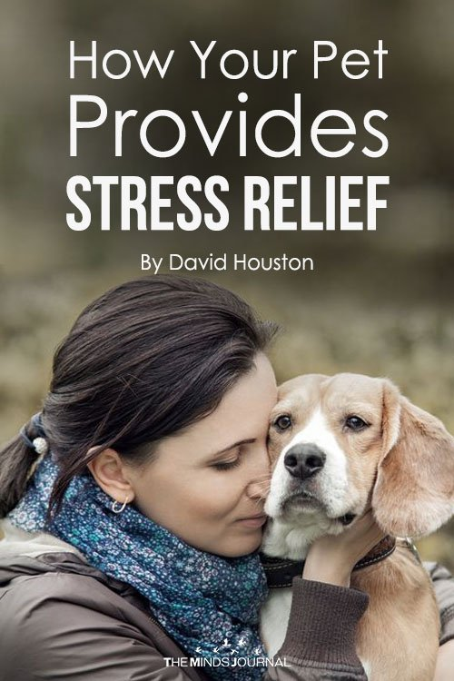 How Your Pet Provides Stress Relief