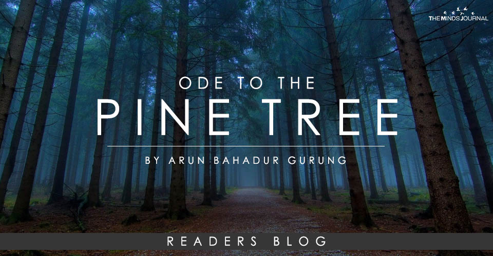 Ode To The Pine Tree