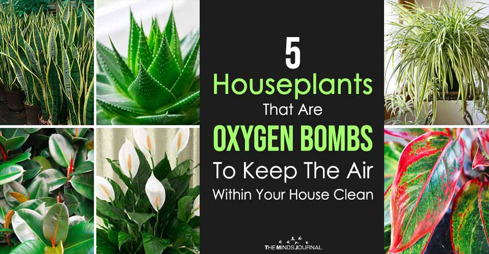 5 Houseplants That Are Oxygen Bombs To Keep The Air Within Your House Clean