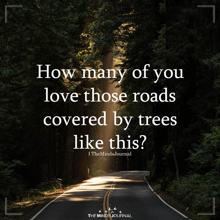 How Many Of You Love Those Roads Covered By Trees Like This