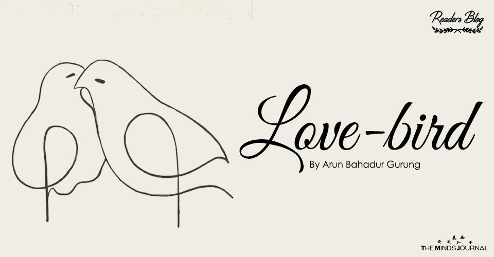 Love- Bird