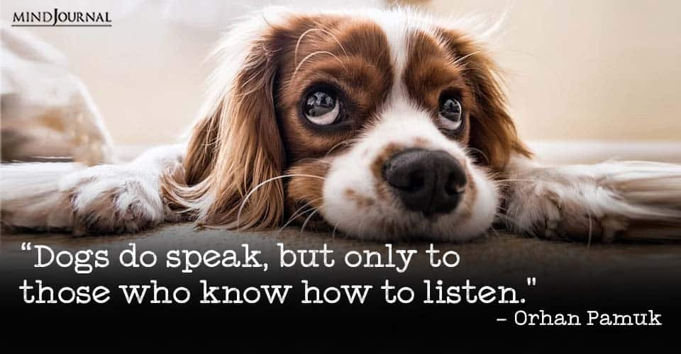 dog quotes that will melt every animal lovers heart