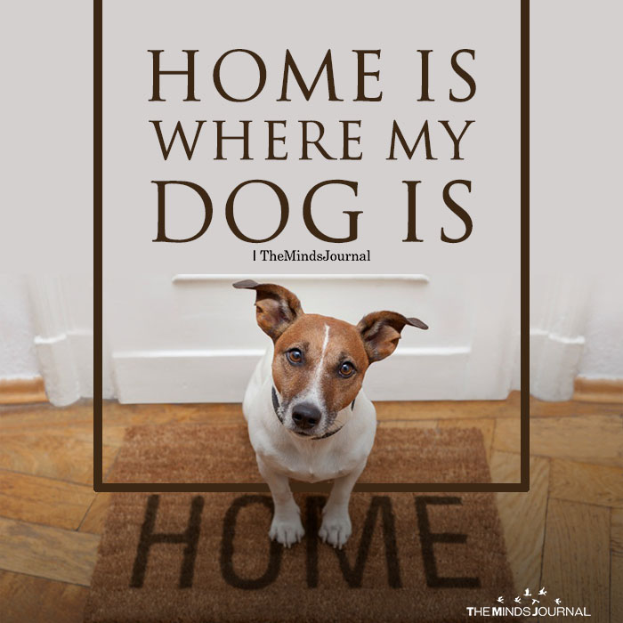 dog quotes home