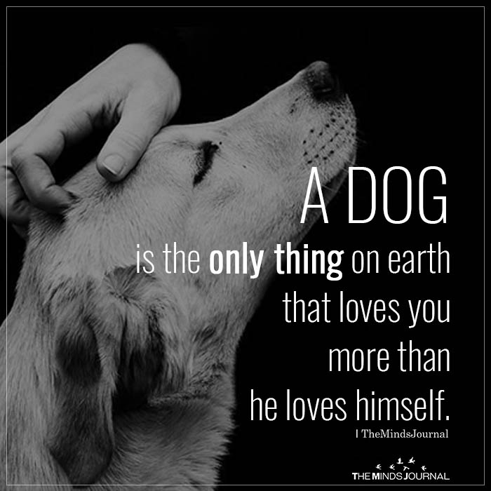 2. A dog is the only thing on earth that loves you more than you love yourself. – Josh Billings