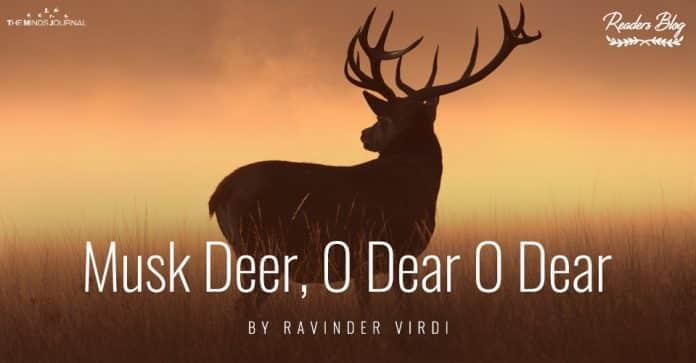 Musk Deer O Dear O Dear