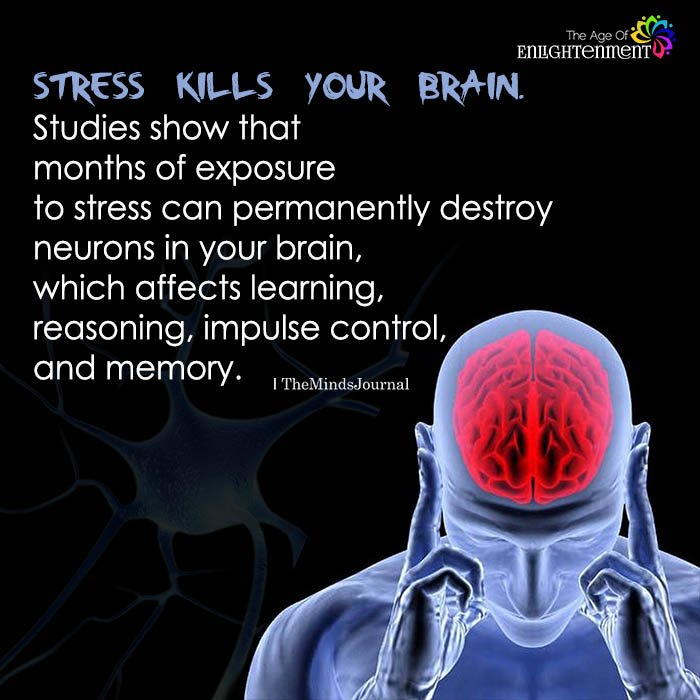 stress kills brain