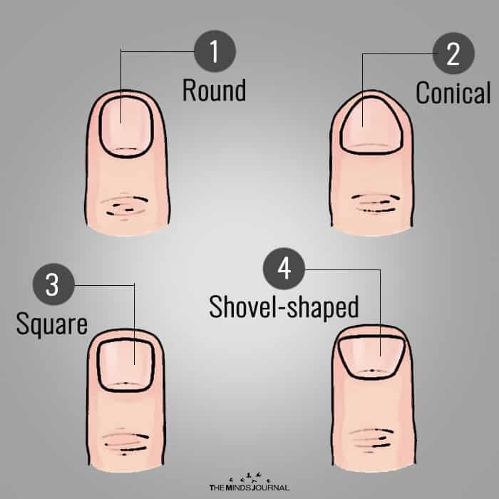 Shape of fingertips