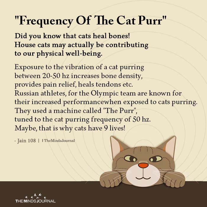 Frequency of The Cat Purr