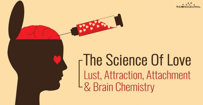 The Science Of Love: Lust, Attraction, Attachment & Brain Chemistry