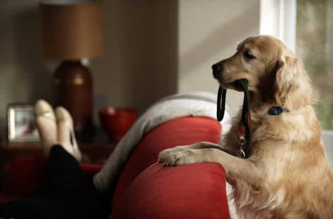 pets keeps brain healthy