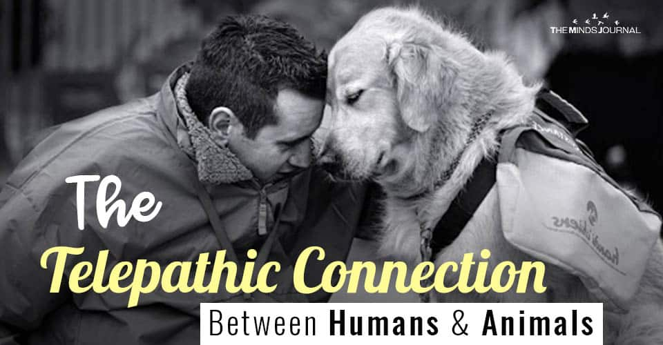 The Deep Telepathic Connection Between Humans and Animals: How To Read Your Pet's Thoughts