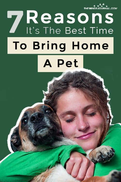 Reasons The Best Time To Bring Home A Pet Pin