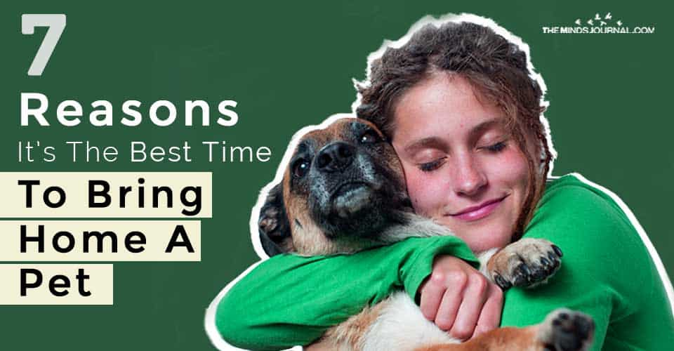 Reasons The Best Time To Bring Home A Pet