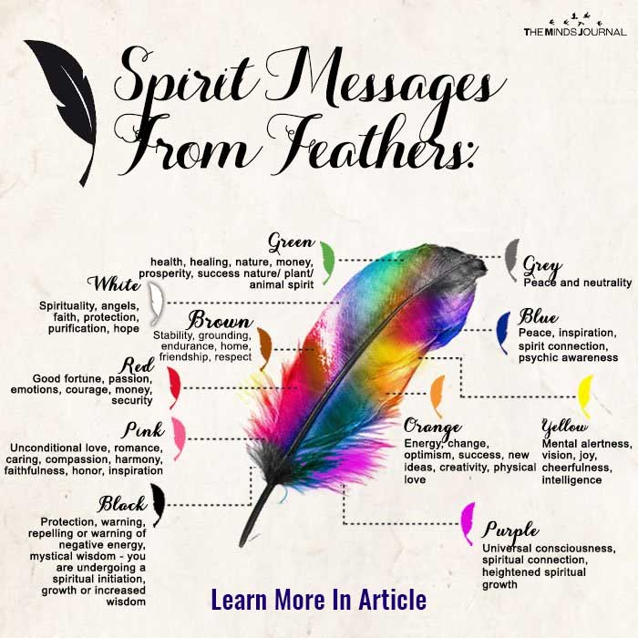 Spirit Messages From Feather: What The Feathers You Find Mean?