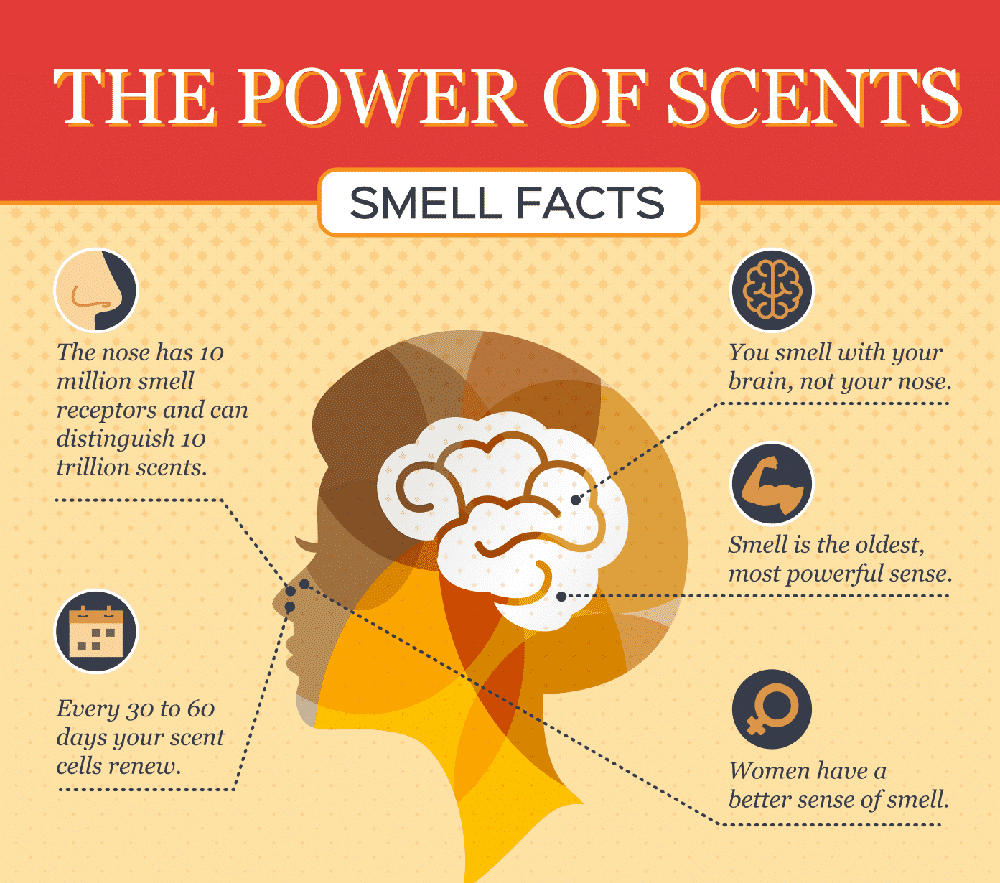 The Psychology Of Olfaction: How Smell Can Influence Your Mood And Behavior