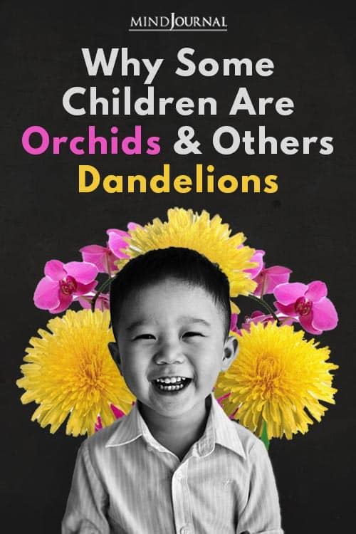 Orchid Hypothesis Are Orchids and Dandelions Pin