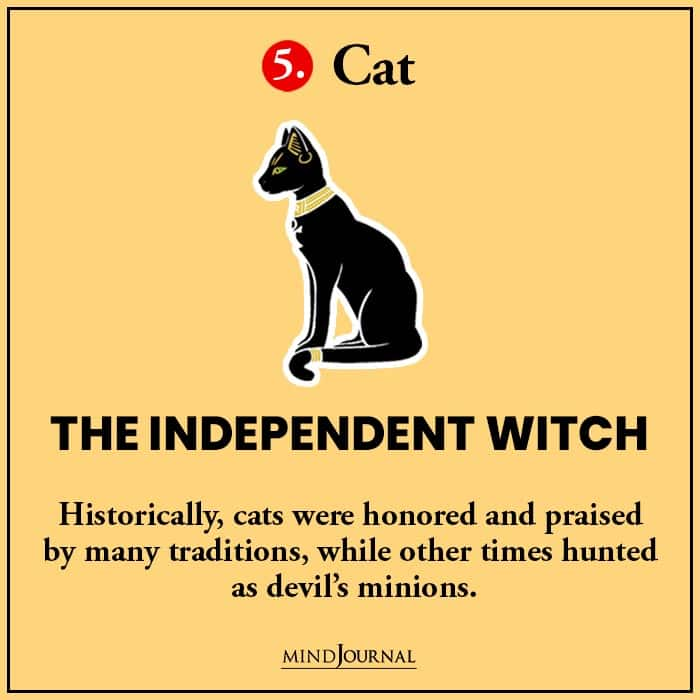 Kind Witch Pick Familiar Find Out cat