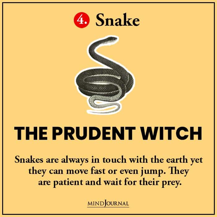 Kind Witch Pick Familiar Find Out snake