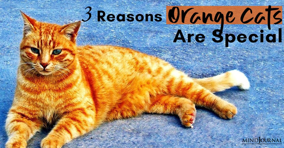 Reasons Orange Cats Are Special