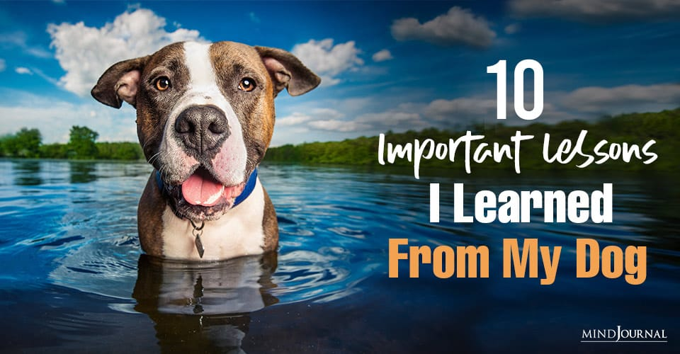 Lessons Learned From My Dog