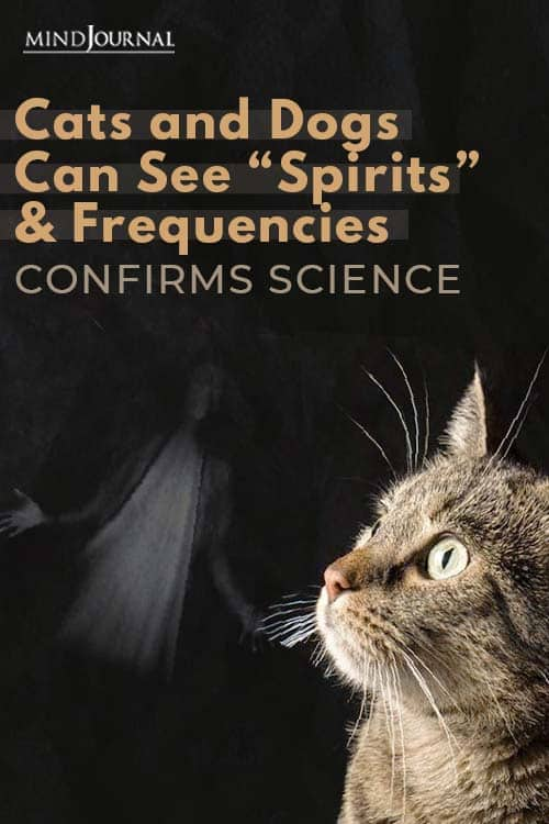 """Science Confirms That Cats and Dogs Can See """"Spirits"""" Pin"""