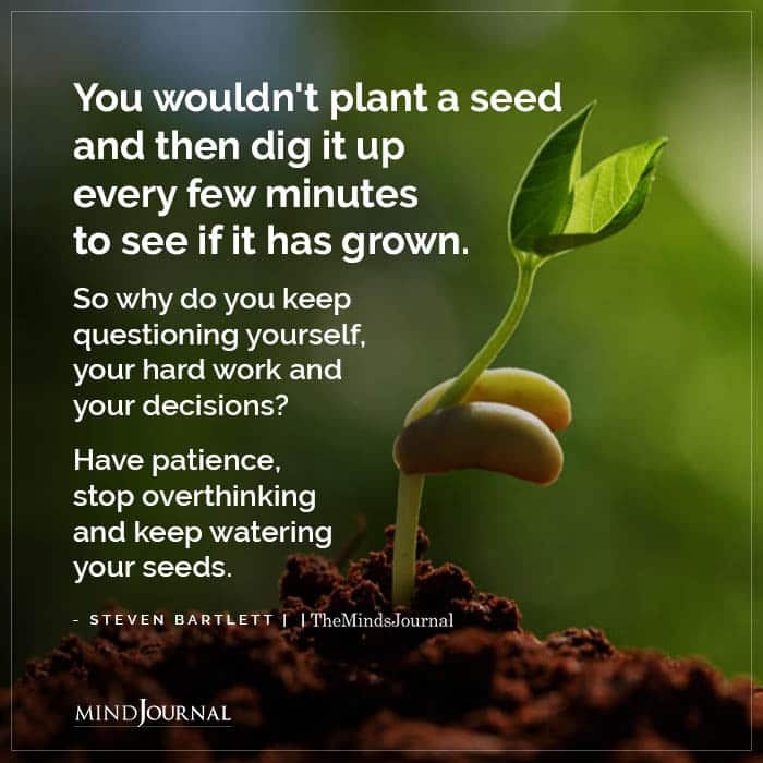 You Wouldnt Plant A Seed