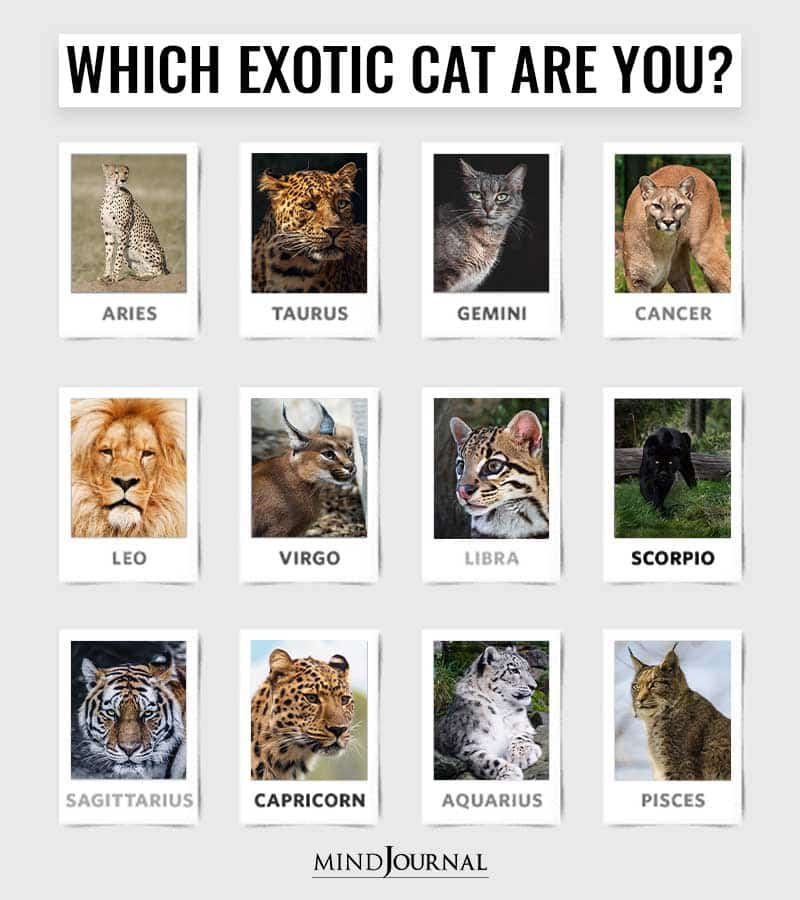Which Exotic Cat Are You Based On Your Zodiac Sign